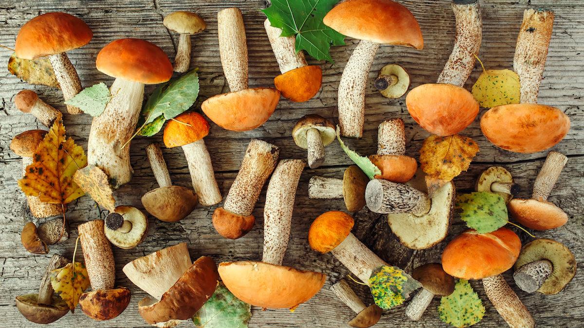 mushrooms with vitamin d